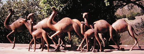 Camel Caravan, Large - Sculpture #371
