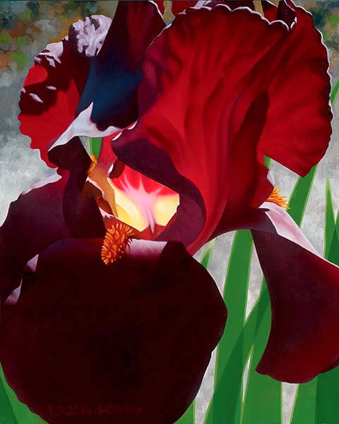 Deep Red Iris Aflame by Brian Davis