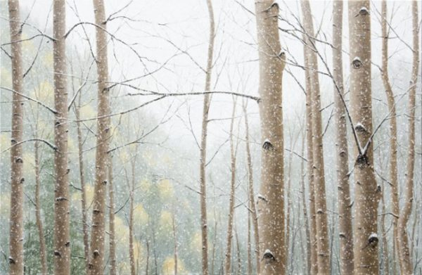 Snow Falling on Aspens - Limited Edition