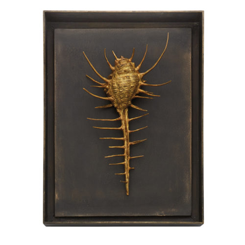 Venus Comb Shell Shadow Box, Item #176054