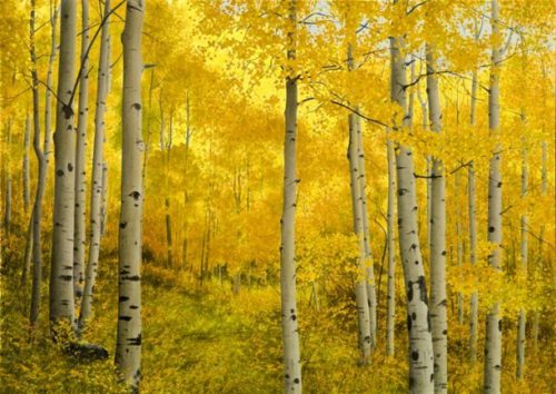 Alone with the Aspens - Collector's Edition