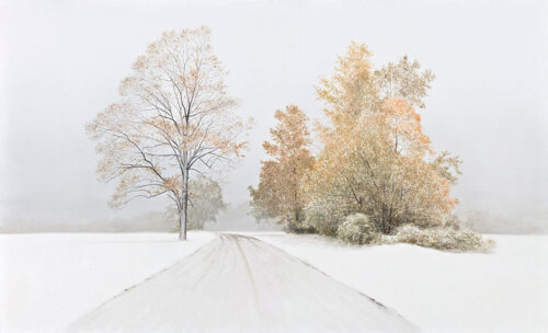 Snowy Landscape with Trees and snow