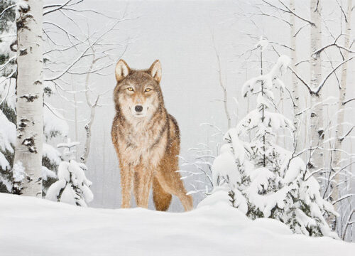Wolf in a snowy forest
