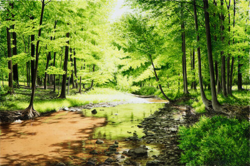 Summer River in Forest