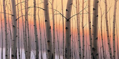 Sunset behind Birch Trees